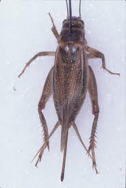 Crickets Tride And True Pest And Termite Control Llc